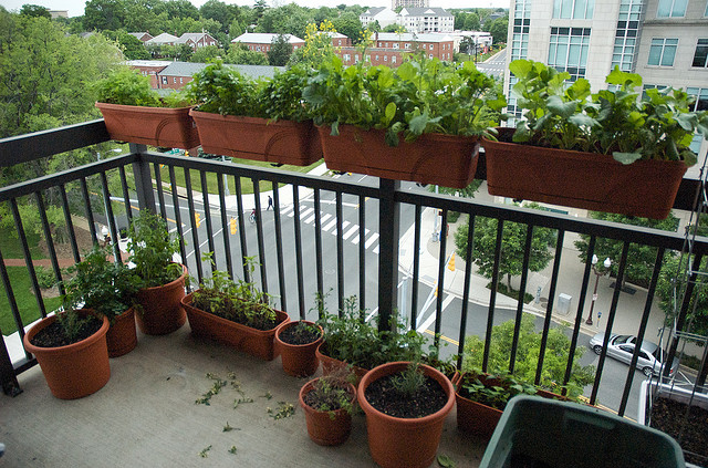 Apartment Vegetable Gardening