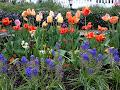 Gardening Tip: