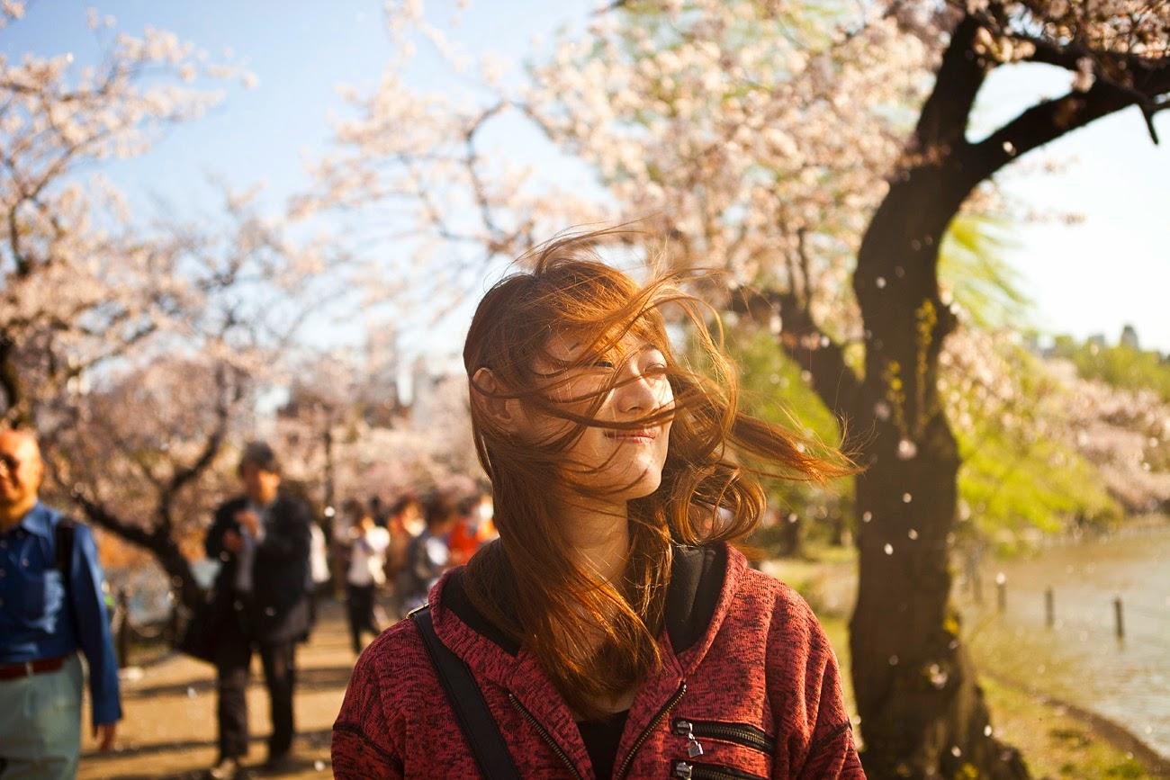 Japonesa entre sakura