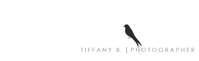 Tiffany B. Photographer