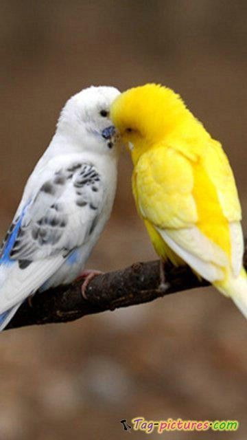 Parrot 105 birds 105 | Do ...
