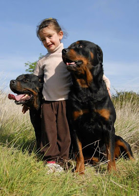 Rottweiler and a kid