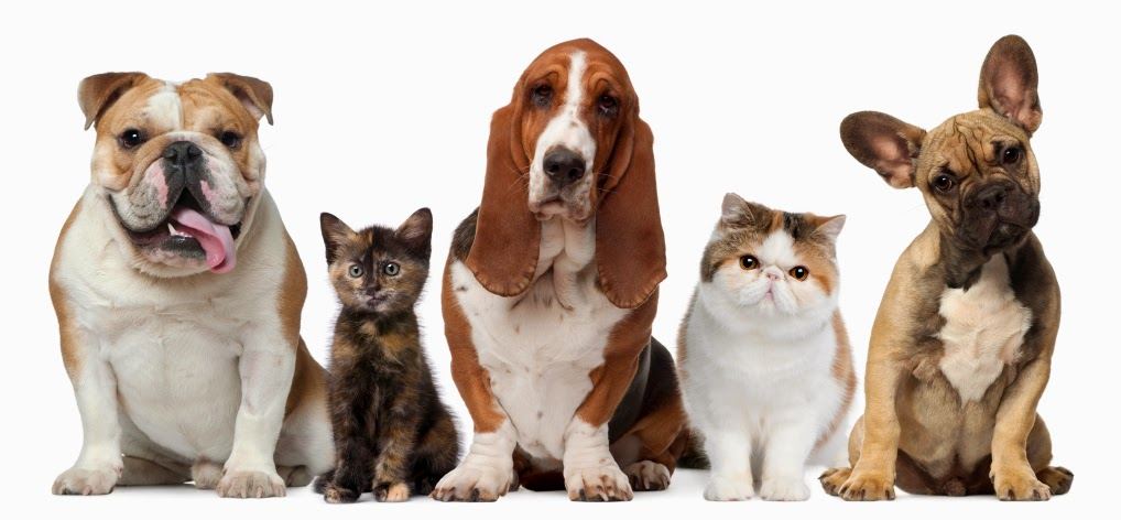 Are you allergic to your favorite pet like Cats and Dogs?