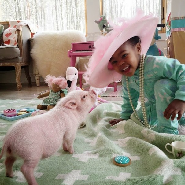 little girl and pig friendship