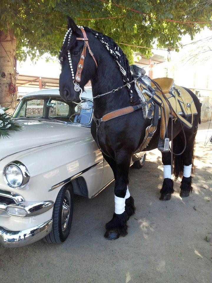 Caballos Aztecas Bailadores I love horses