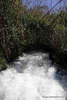 Hermon River (Banias) Nature Reserve