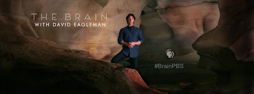 http://www.eagleman.com/research/11-david-eagleman/113-the-brain-pbs
