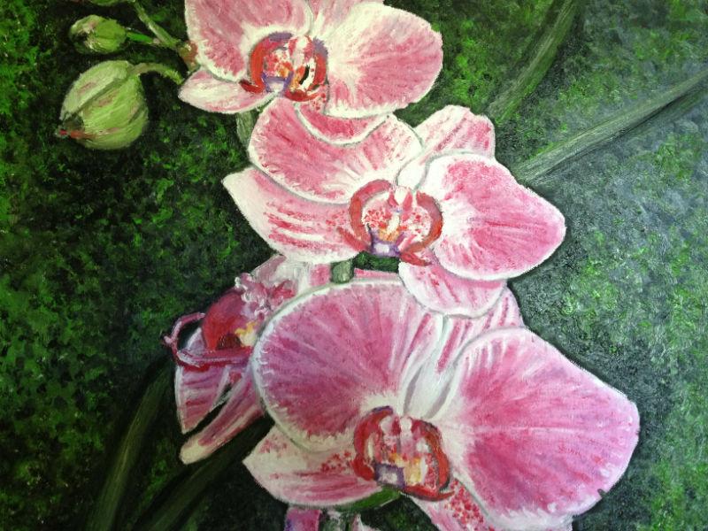 Phalaenopsis par Eliland