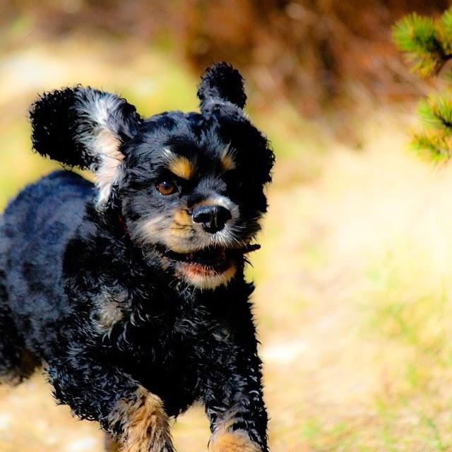 Amazing dog photography
