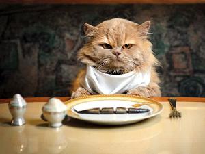 Cara Memberi makan kucing yang tidak mau makan