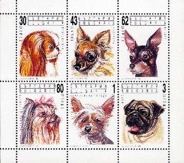 1991年ブルガリア共和国 狆 チワワ ミニチュア・ピンシャー ヨークシャー・テリア チャイニーズ・クレステッド・ドッグ パグの切手シート