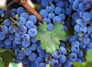 Grapes Close up Bunch Leaves Brush HD Wallpaper