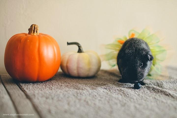 guinea-pig-halloween-costume
