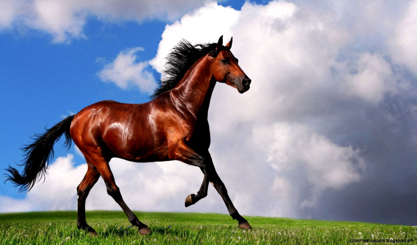 Arabian Horse Desktop Wallpapers   New WallpapersNew Wallpapers