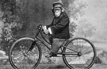 el villano arrinconado, chistes, humor, satira, chimpance
