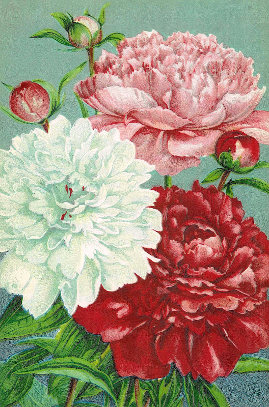 Vintage Flower Clip Art: Pink, Red, and White Carnations from Vintage  title=