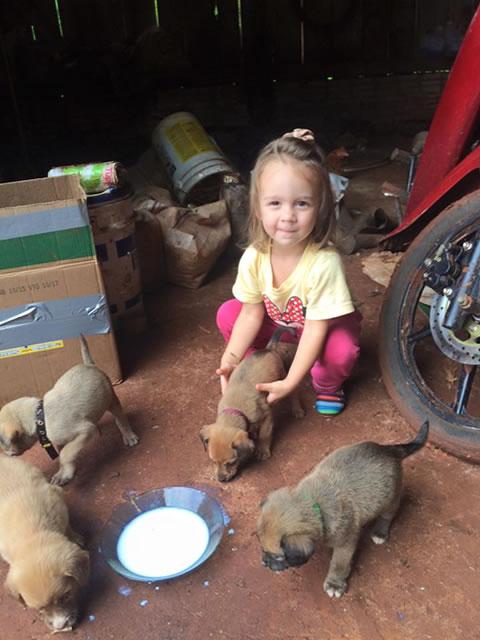 Perritos rescatados en la selva 12