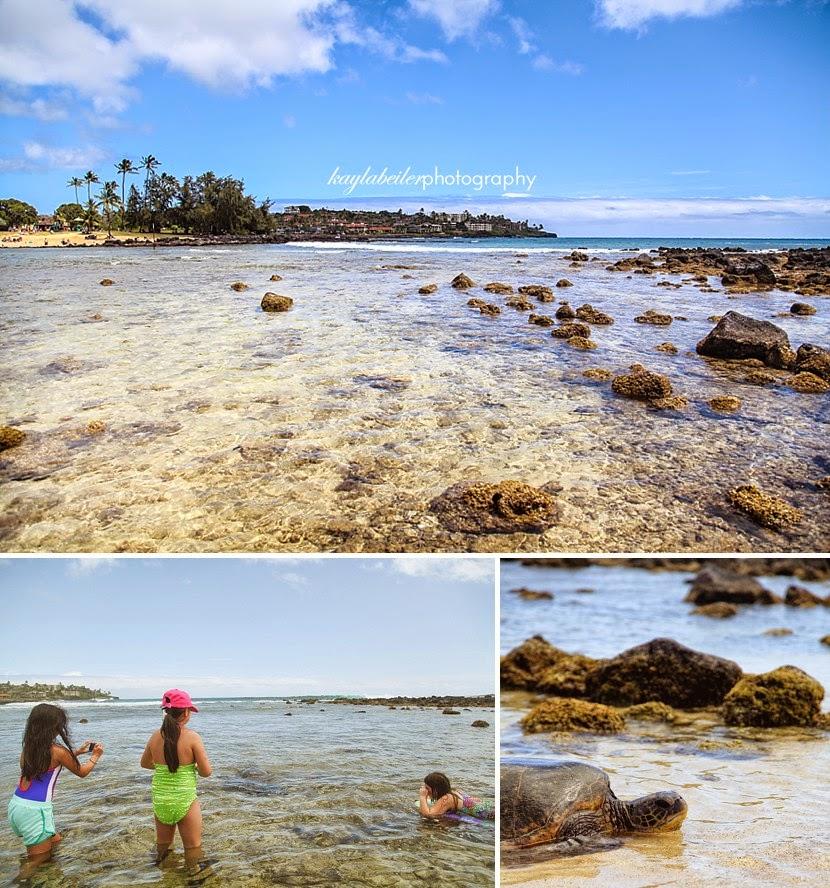turtle poipu beach photo