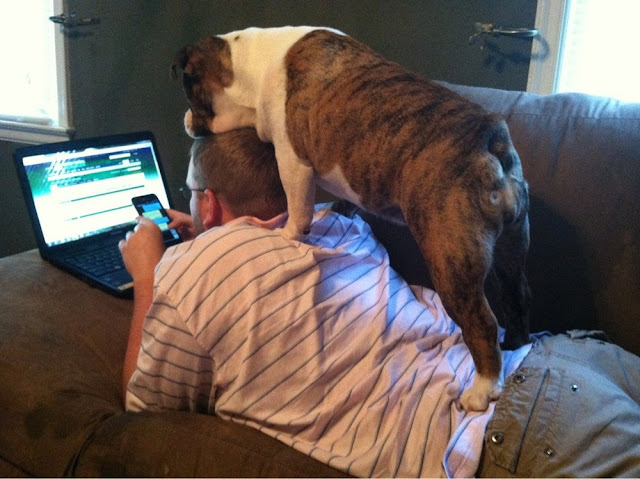 funny animal pictures, dog standing on his owner back
