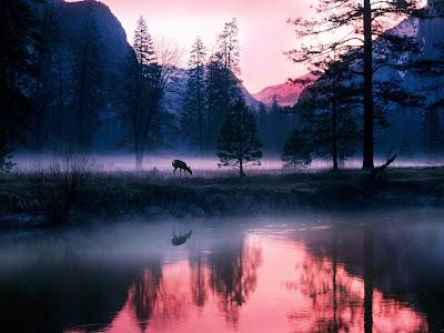 Lindo paisage de invierno con venados