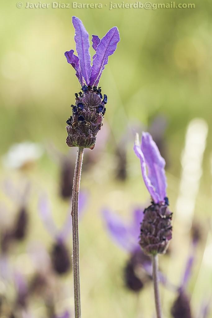 Imagenes De Flores Frescas - Fotos de Flores frescas Imágenes Minube com
