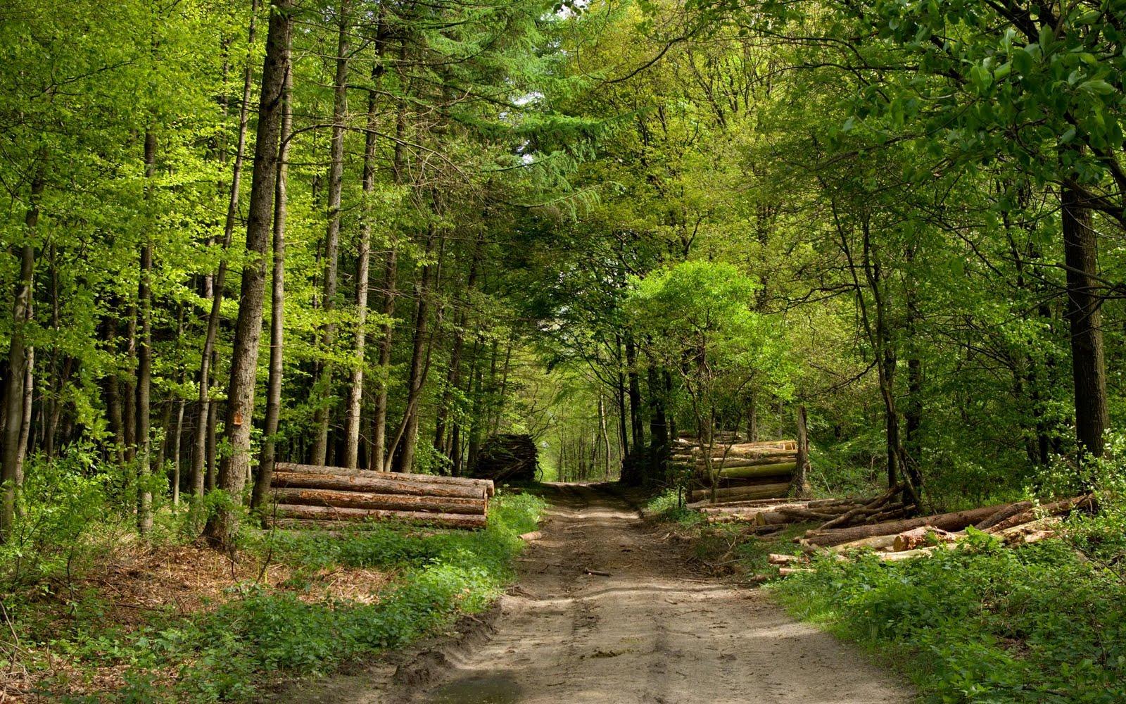 Amo a shane gray paisajes para fotomontajes for Columbia woods