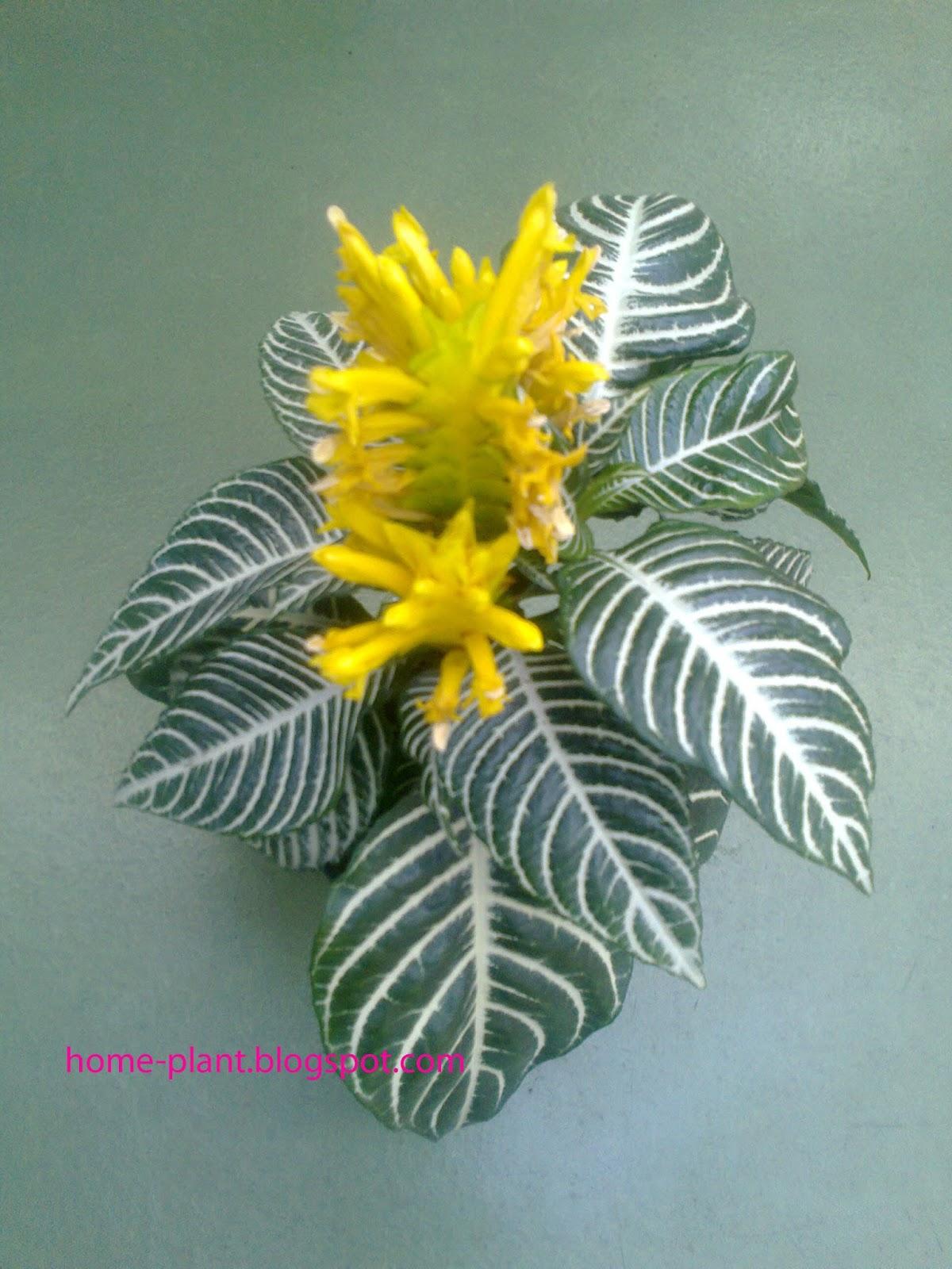 Цветы длинный стебель фото