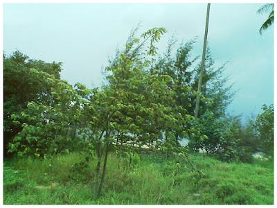 Bintan, Riau Islands - Indonesia