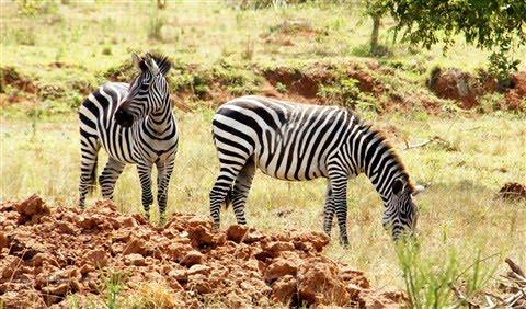 sony nex sel 18-200 lens safari