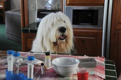 Abner, o Cão Invisível - Divulgação