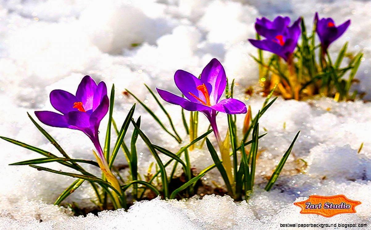 Animated spring flowers screensavers best wallpaper background view original size mightylinksfo