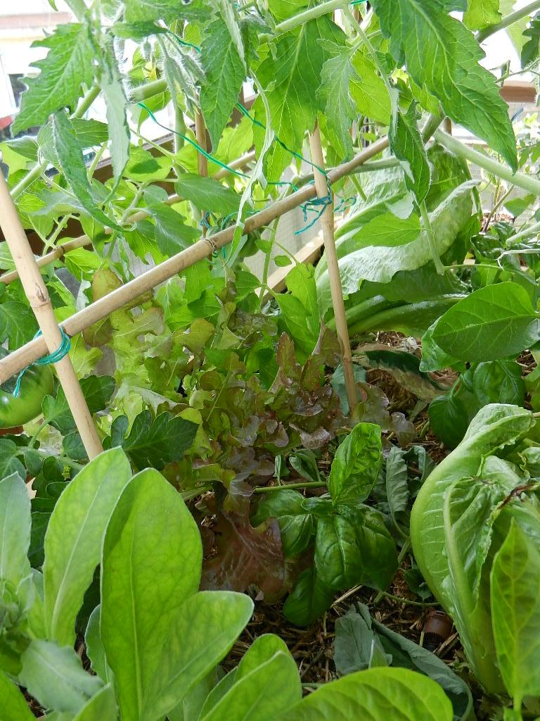Consejos para tu huerto el balcon verde for Incompatibilidad en plantas