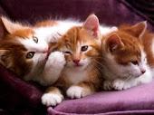A fidelidade e a docilidade dos felinos me encanta!
