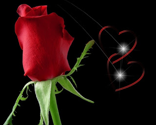 Images For Wallpapers For Desktop 3D Red Rose