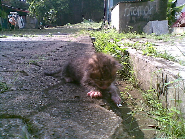 Ngocehnajis Day 52 Day 4 Kucing