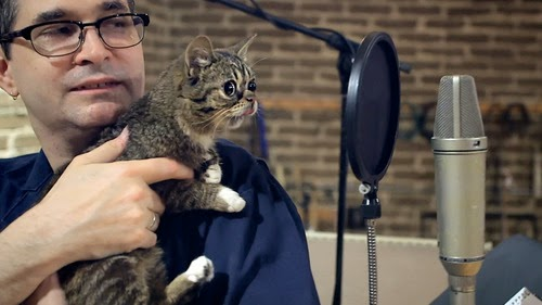 Steve Albini and a cat. Even Steve Albini loves cats.