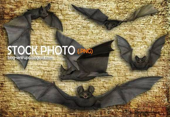Stock Photo Gambar Kelelawar