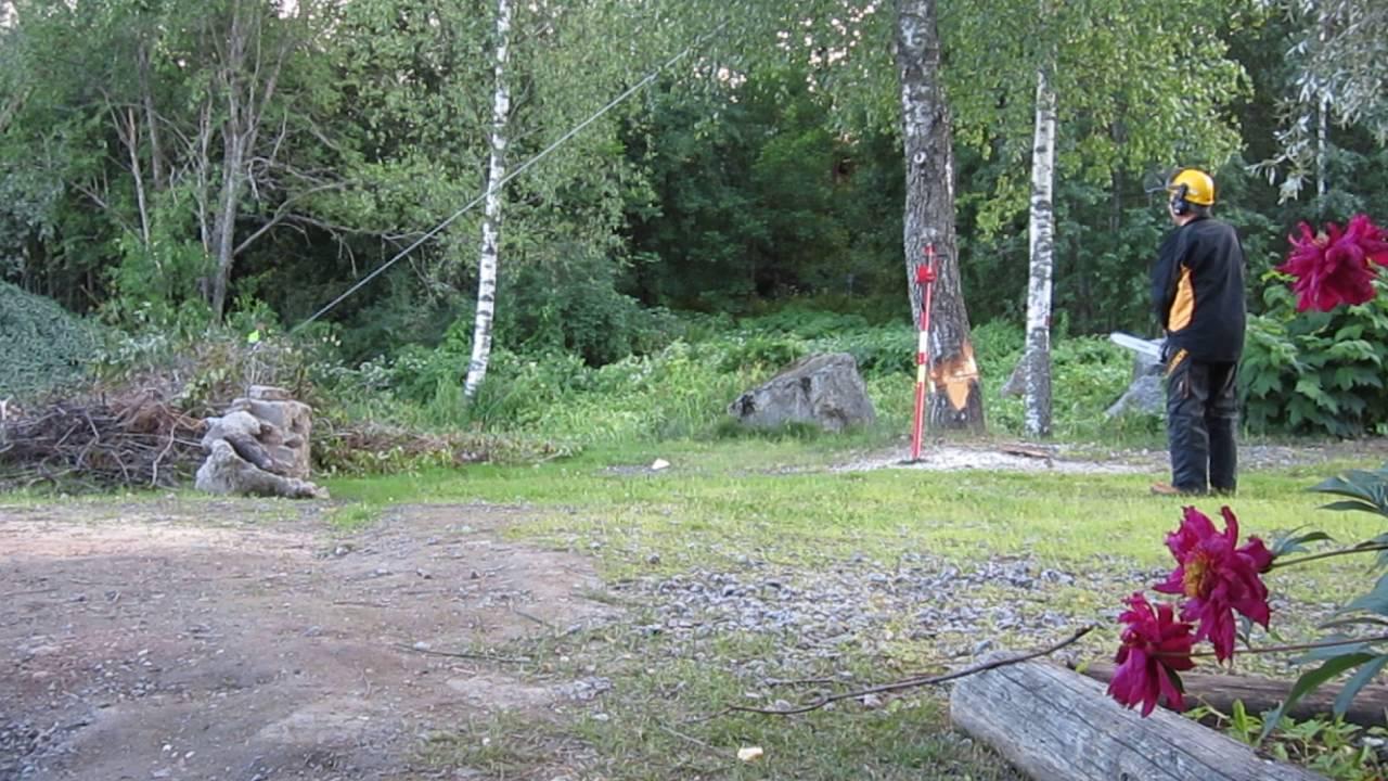Pensasaitojen leikkaukset, pihapuiden kaadot suorina kaatoina Tampere Pirkanmaa
