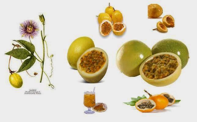 para que sirve el acido urico en el cuerpo humano dieta para controlar acido urico alto como eliminar el acido urico rapido