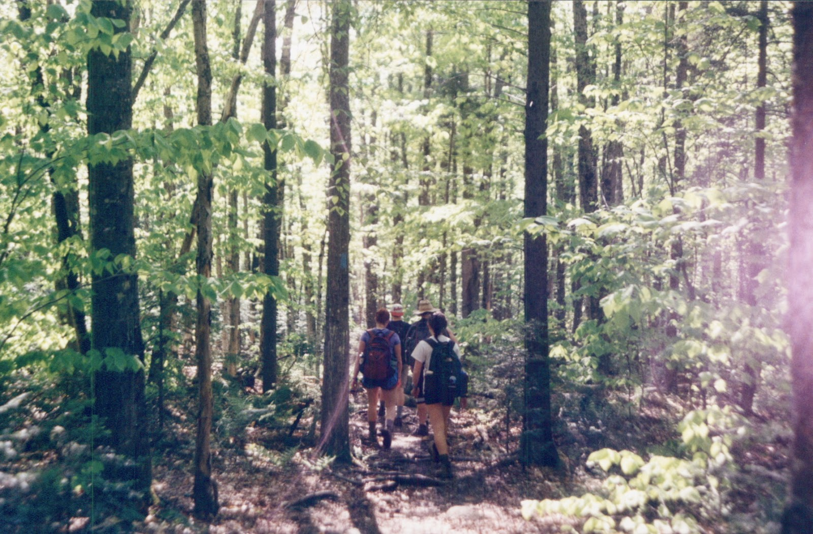 Hiking in the Maine Woods