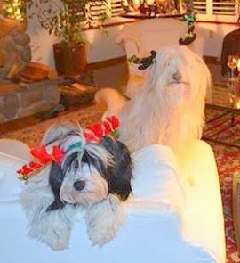 Auggie (on right) and his brother ZiGi prepare for the holidays