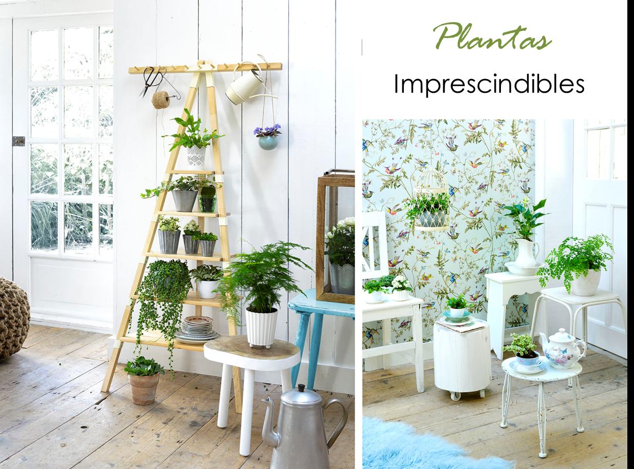 Decoraci n f cil plantas imprescindibles en el hogar for Armonia en el hogar decoracion