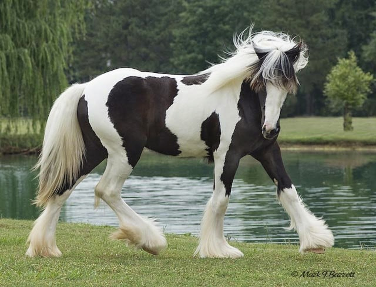 dynamic views most most beautiful horses in the world in
