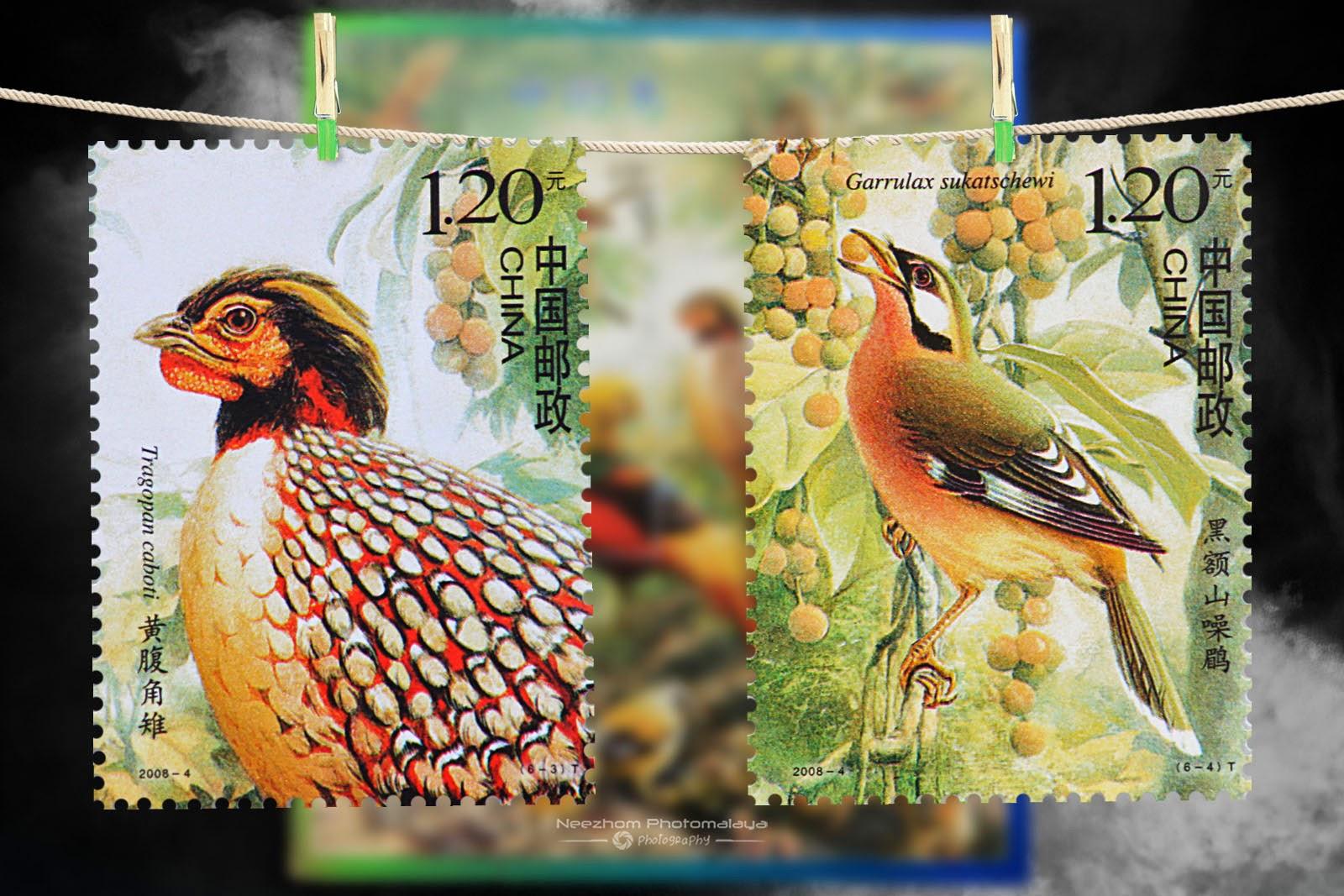 2008 Birds of China stamps - Tragopan cabati, Garrulax sukatschewi