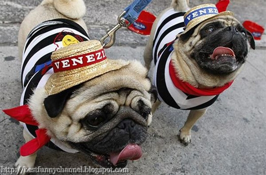 two funny dogs with hats