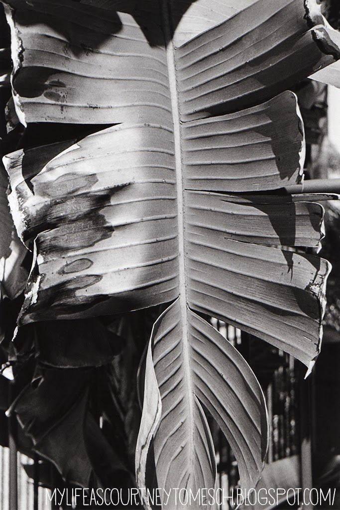 Black and White Photography Palm leaf