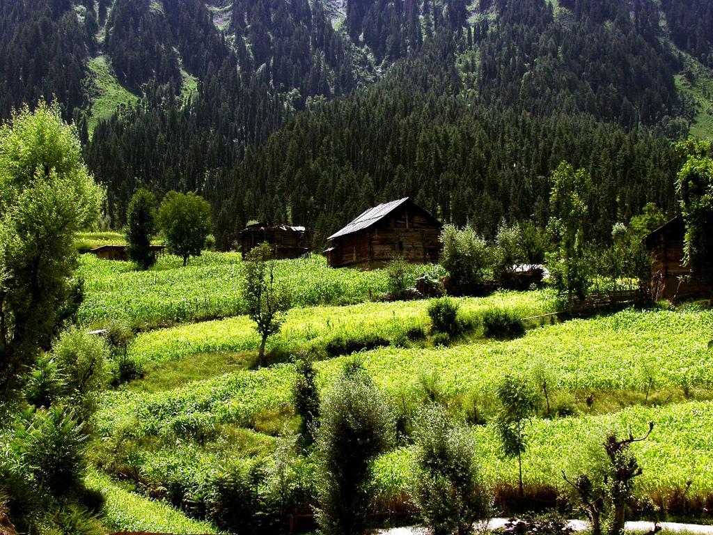 Natural beauty of kashmir essay