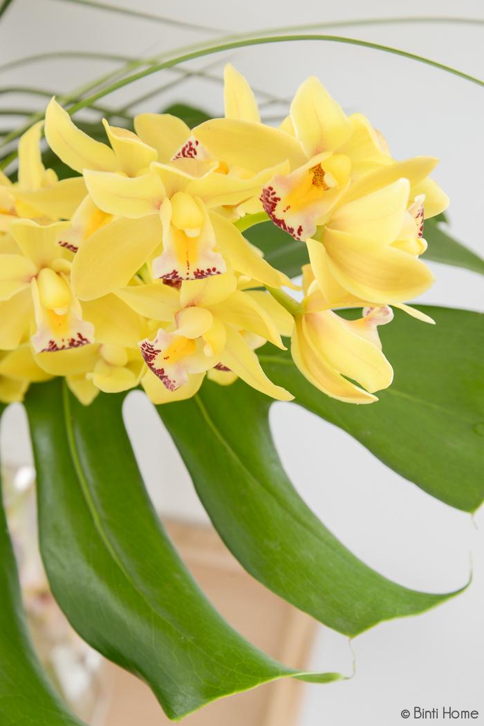 Cymbidium bloem - Bloomon bloemabonnementen - © Binti Home