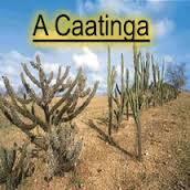 Professores e estudantes de Delmiro Gouveia fazem ação de plantio de mudas da Caatinga