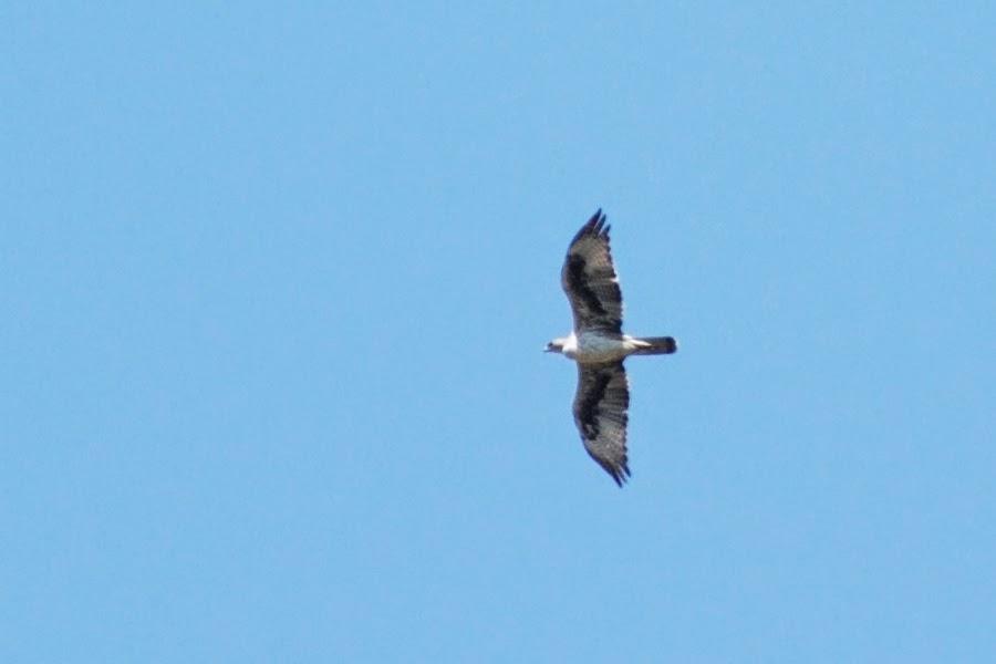 Excursión SEO/BirdLife al Peñón de Zaframagón.